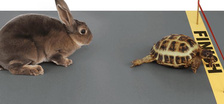 bunny-turtle-beginning-transformation