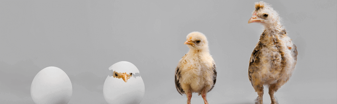 chicken or the egg dilemma, what framework to chose?